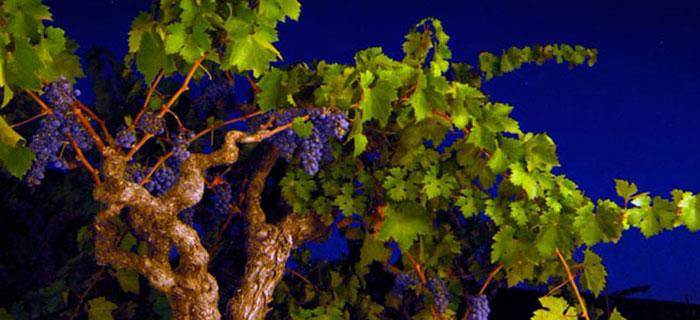 Historic Vineyard Society