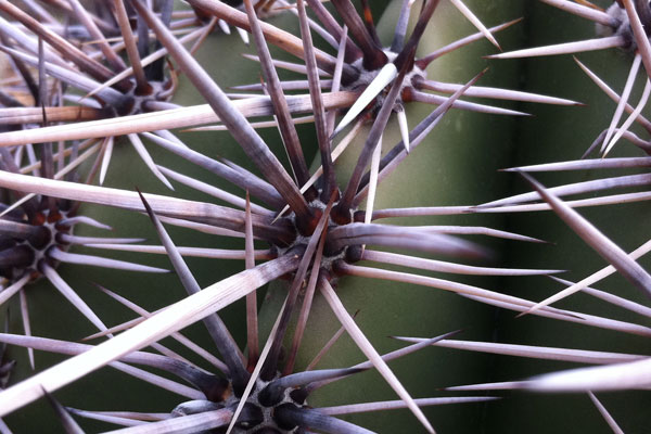 Without proper etiquette, email communication can get ... prickly.